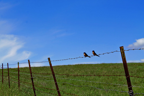 santacruz birds day clear ucsc