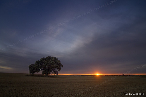 sunset sky españa atardecer oak spain cielo extremadura encina