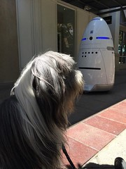 Today I met an emergency robot at Stanford Shopping Center. Funny little dude who makes weird noises and talks