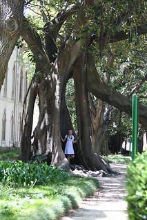 sanna ja puu
