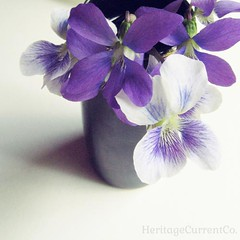 Sugared Violet DIY Tutorial - Vase of Violets