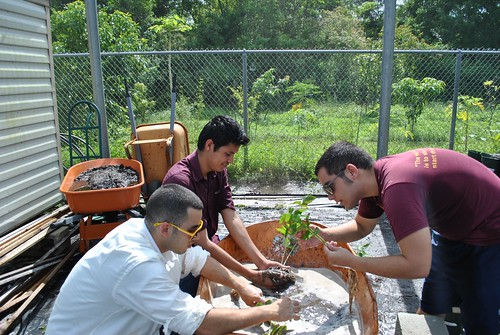 Florida International University Agro-Ecology students (from left) Ayman Elyasin, German Adan, and Marcus Rubi transplant pepper seedlings to organic soil.
