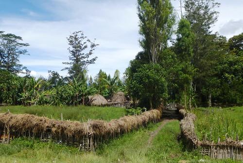 Papua13-Wamena Nord-Wosilimo (78)