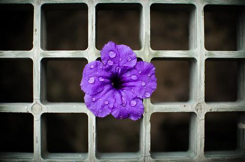 La Flor Atrapada