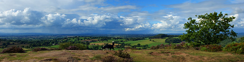 dog oak cheshire bickertonhill lowlandheath