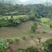 Cornfield - Campo de siembra de maíz; camino entre Majosik y Tenejapa, Chiapas, Mexico por Lon&Queta