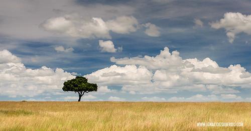 Kenia - Masai Mara 11