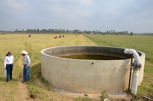 Irrigation water helps to produce the quality forages, or food for cattle, such as bluestem and bermuda grasses. Photo courtesy of NRCS.
