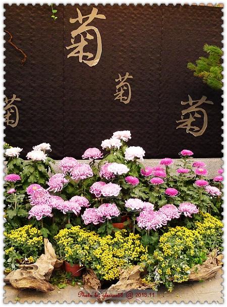 2013菊花展-2a