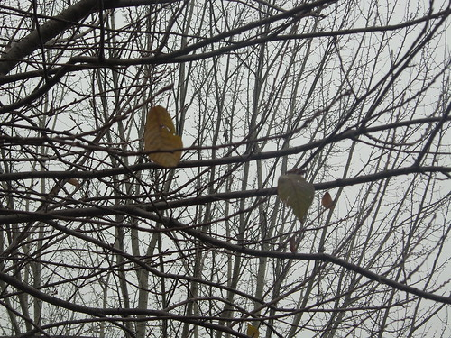 Intrecci di due alberi com tre foglie by Ylbert Durishti