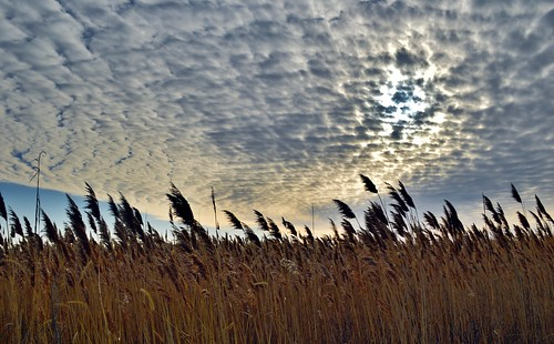sunset reeds day cloudy fireisland mygearandme mygearandmepremium mygearandmebronze mygearandmesilver mygearandmegold mygearandmeplatinum mygearandmediamond photographyforrecreationclassic