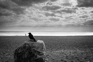 crow 20140105-2