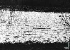 Preserve in Black and White