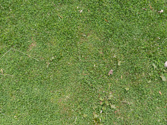 Grass_green-plants-clover-whiteflowers-dirtpatches_wide-2.jpg