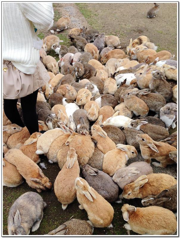大久野島 Rabbit Island
