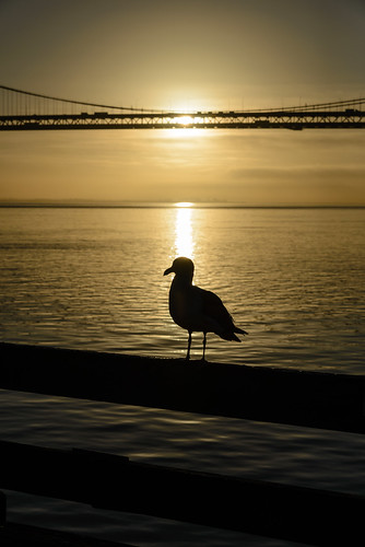 sanfrancisco california morning sky usa bird water silhouette sunrise reflections gold wasser unitedstates seagull unitedstatesofamerica baybridge railing brücke möwe vogel sanfrancisco–oaklandbaybridge
