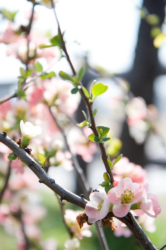 2014-03-28 14-05-45 - _MG_7663