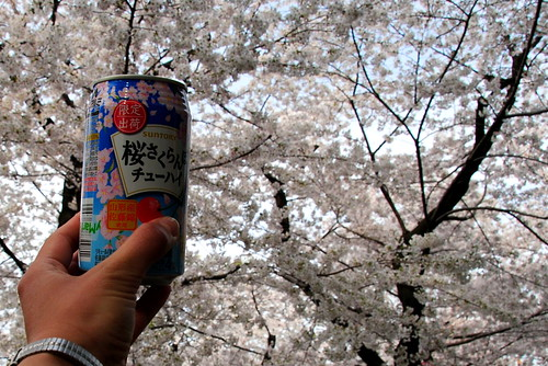 Tsurumai Koen Sakura 008r