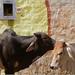 every inch matters!, jaisalmer