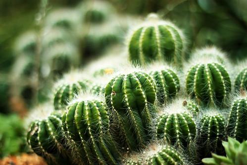 Cactus Town II