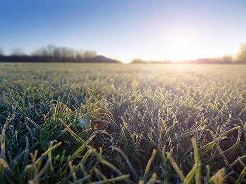 sun sol grass wales sunrise frost bokeh cardiff gales amanecer cesped salidadelsol lx7 pontprennau lumixlx7 panasoniclumixlx7