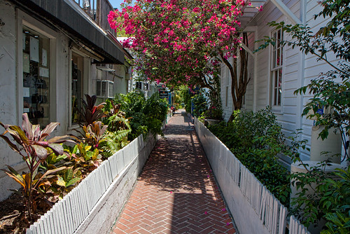 Bougainvillea Avenue