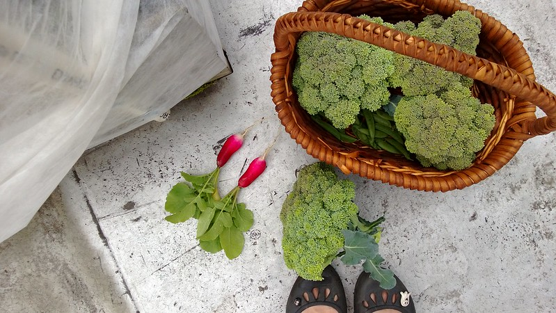 broccoliWP_20130603_052