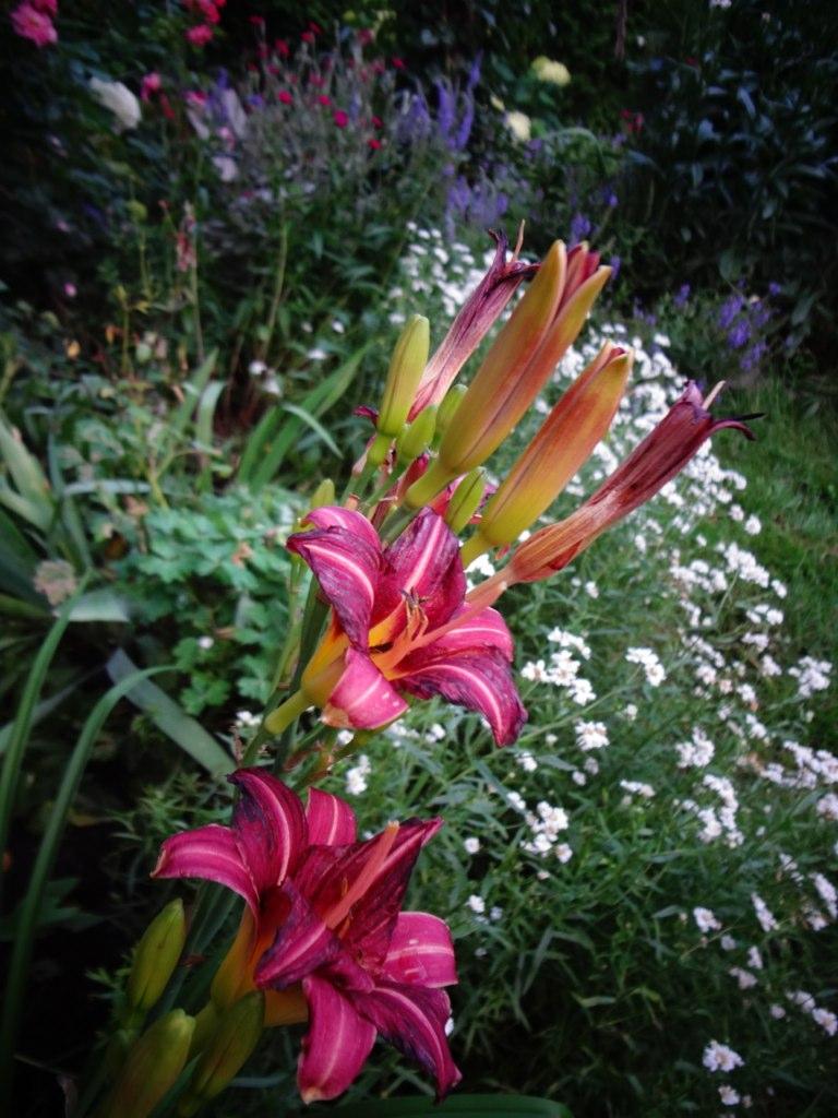 Joseemm mon jardin saison 2013 for Jardin 4 saisons albi
