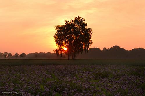 sunrise almelo bijenruid