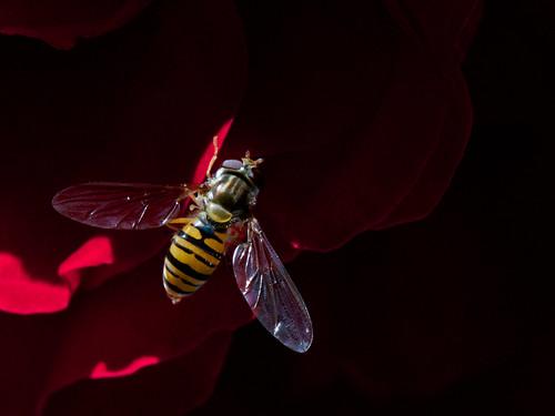 To Bee or not to Bee? by Manuel Buetti