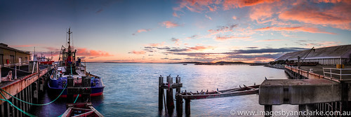 green dogs sunrise boat pigeons wharf southaustralia portlincoln eyrepeninsula