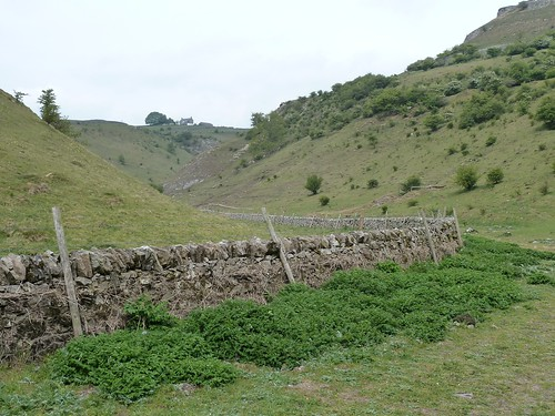 On a walk from Tideswell Dale ~ 6th May 2011.