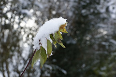 neige - Photo of Chartronges