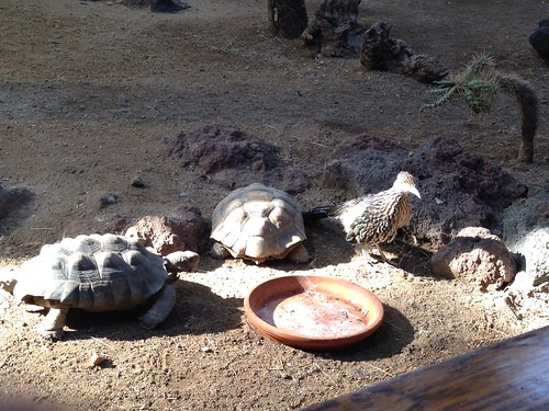 ZooAmerica - Tortoises and roadrunner