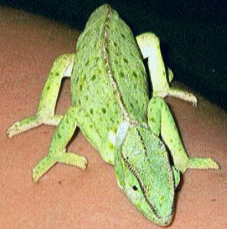 Kenia2002-01-12