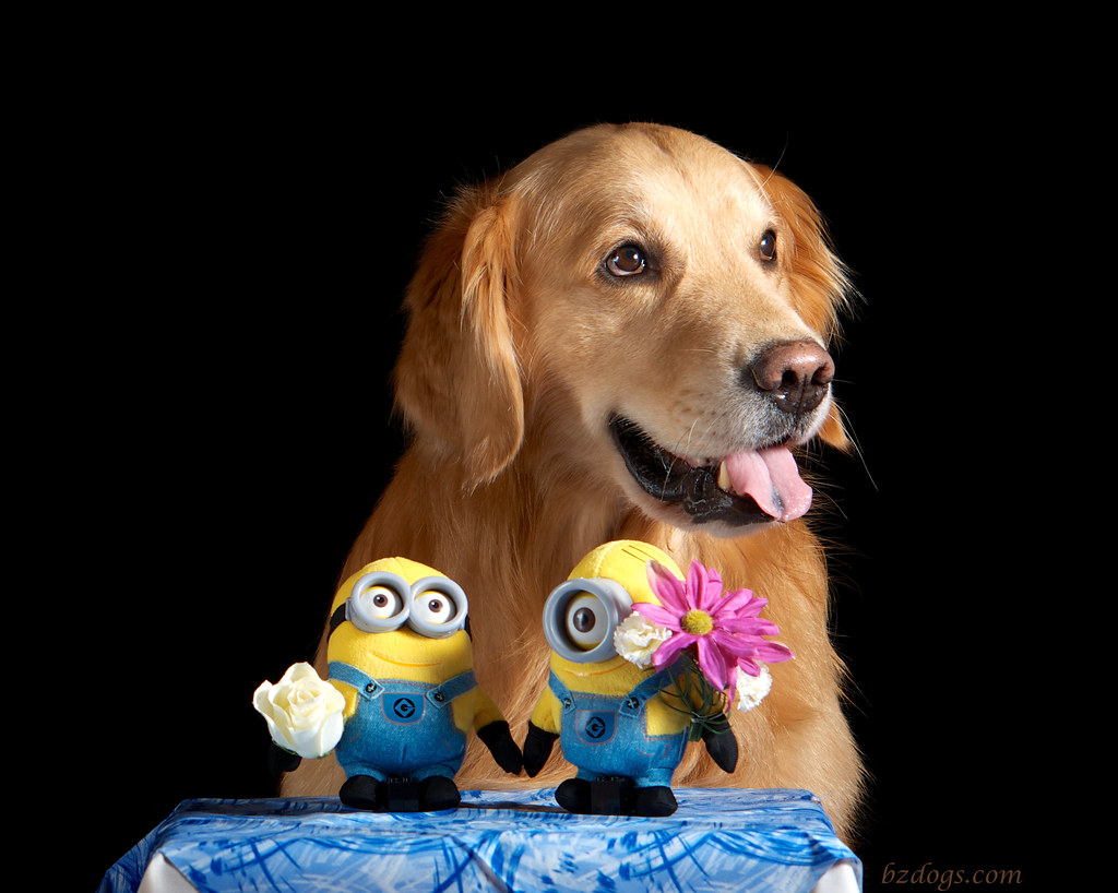 Zachary and the Minions