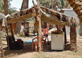 Image of Camel Market Al Ain. palms hut oasis shelter armchair washingmachine alain humpy incongruous context