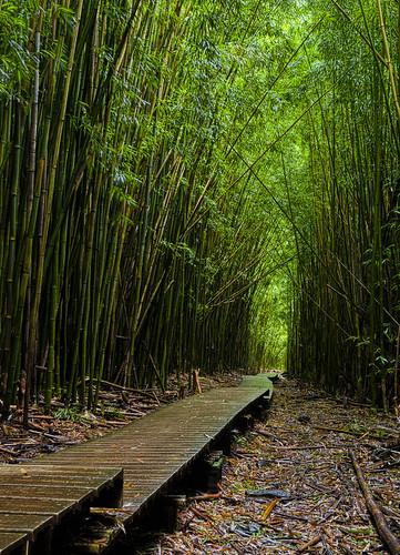 maui boardwalk bambooforest haleakalanationalpark