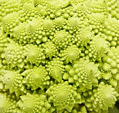 Romanesco broccoli close up