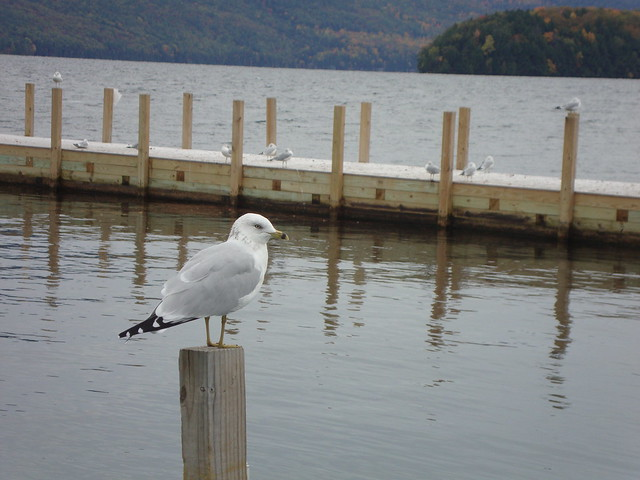 Lake George birds