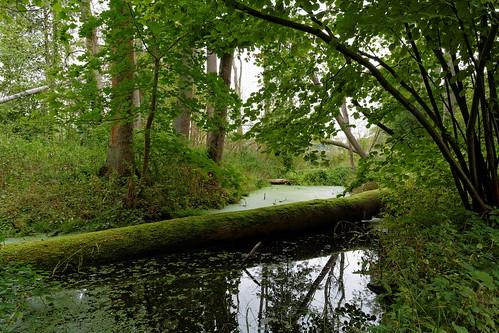 Lower Oder Valley National Park