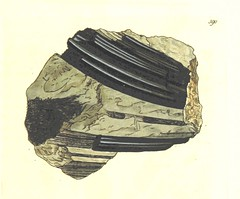 """British Library digitised image from page 381 of """"British Mineralogy: or coloured figures intended to elucidate the mineralogy of Great Britain. By J. Sowerby (with assistance) . F.P"""""""