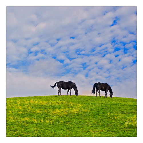 blue autumn england sky horses horse weather animals clouds eating hill farmland lancashire grazing alienskinexposure applecrypt