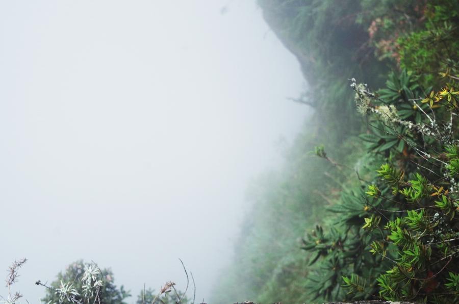 mist at worlds end in horton plains, sri lanka