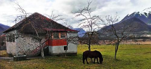 camera horse nature beautiful animals landscape photo village phone object cell grazing