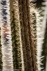 15/365 - Cactus