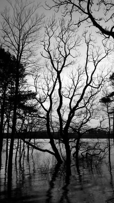 Spellcaster trees