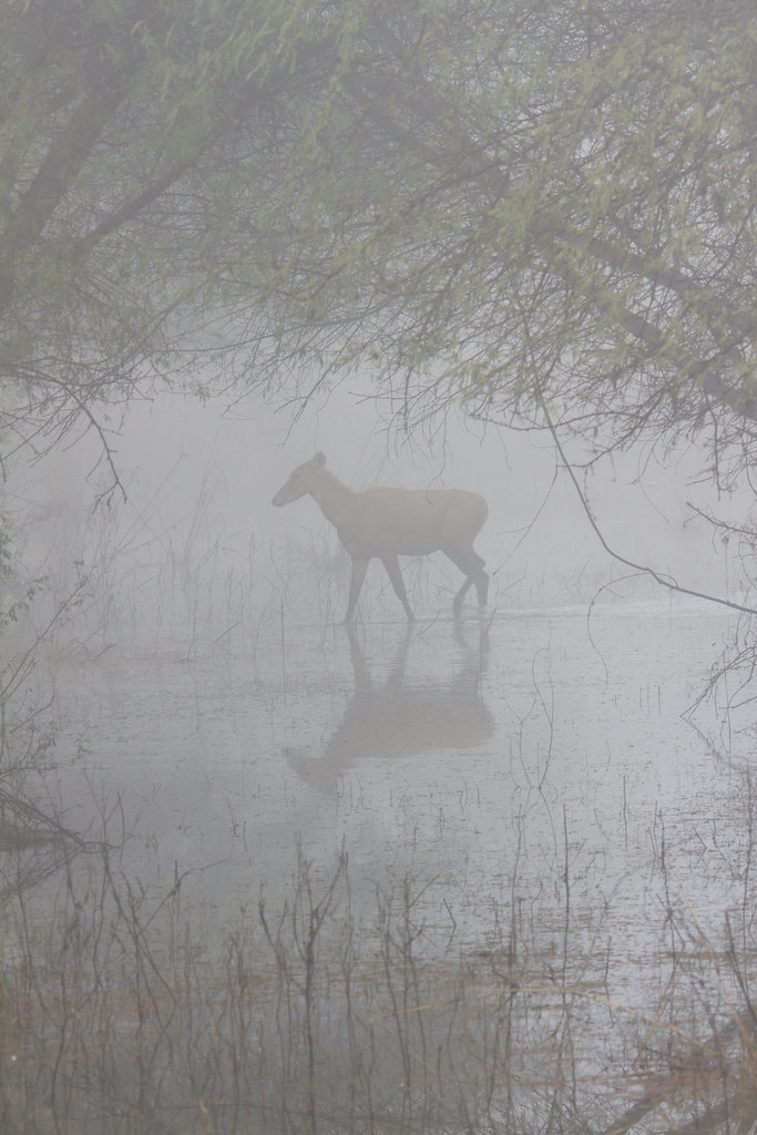 14_01_20142975055715_reflections_in_fog