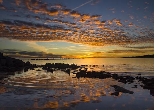 sunset reflection bird gulfofmexico nature animal landscape wildlife coastline 550d
