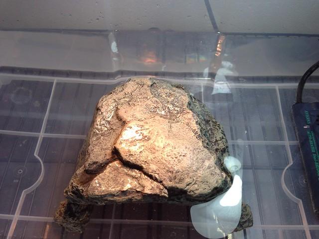 2014/3/1 ワモンチズガメ 大きく変えて安定した飼育環境2